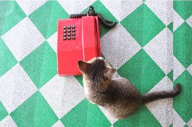 cat_phone