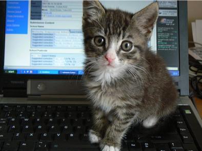cat_computer